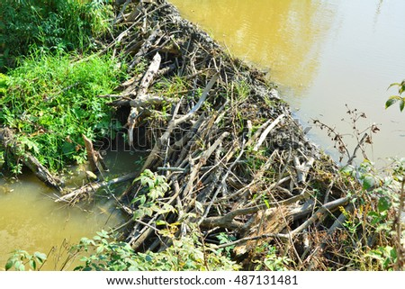 Beaver dam created on river