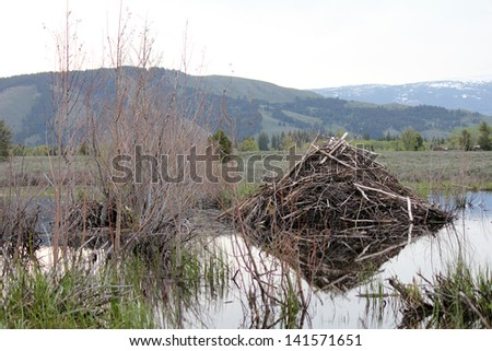 Beaver Dam off the Moose-Wilson Road, Grand Tetons National Park - stock photo
