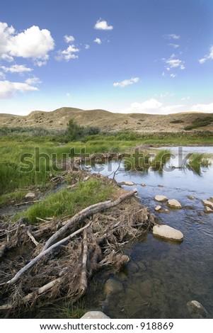 Beaver dam on the swift current creek near Stewart Valley - stock photo