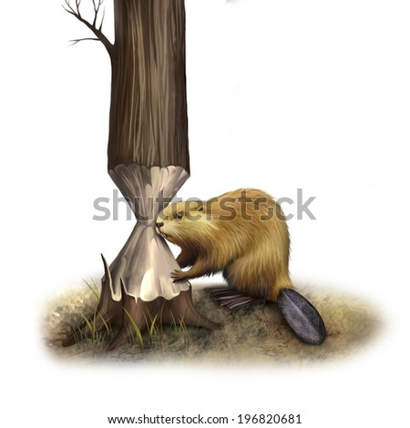 Beaver gnawing on tree. North American Beaver, Illustration isolated on white background - stock photo