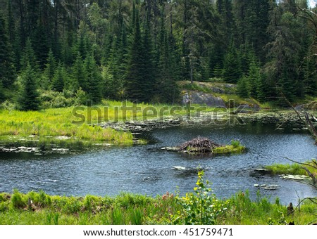 Beaver home on the lake in rushing river provincial park,  Ontario, Canada - stock photo