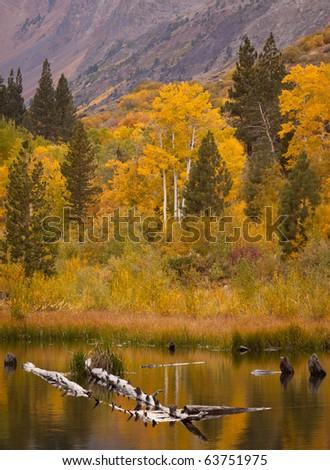 Beaver Pond Reflection - stock photo