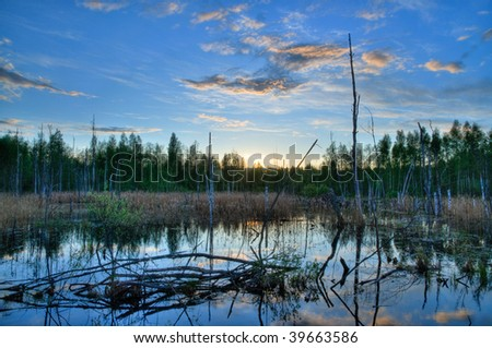 Beaver pond with beavers hut at sunset
