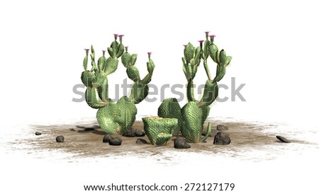 Beavertail Cactus cluster -  isolated on white background - stock photo