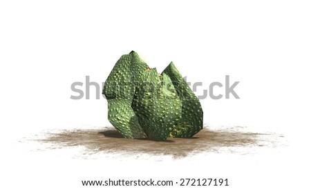 Beavertail Cactus -  isolated on white background - stock photo