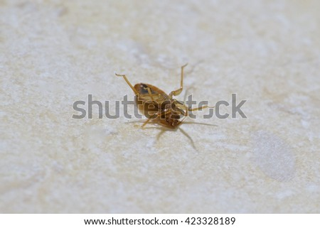 Bed Bug - stock photo
