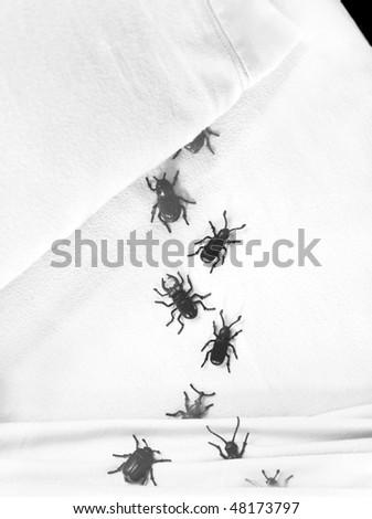 bedbugs - stock photo