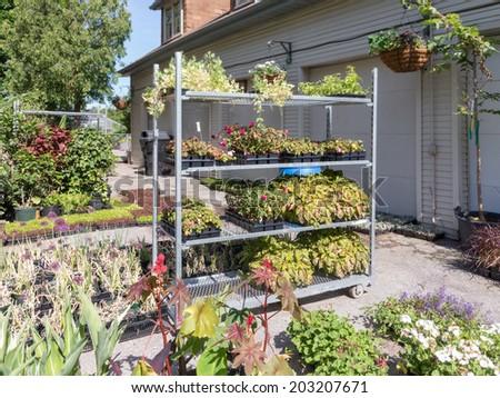Bedding plants in garden maintenance area - stock photo