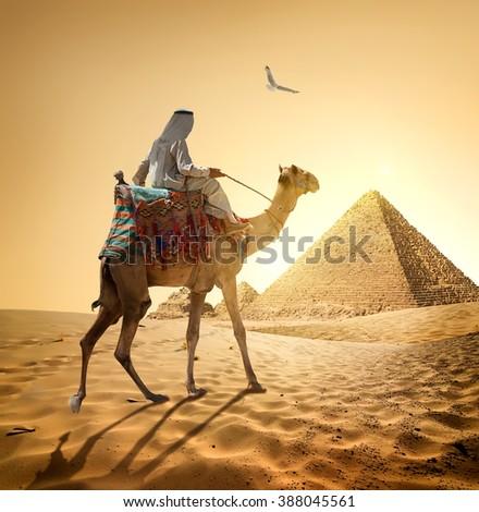 Bedouin and bird - stock photo
