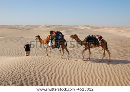 bedouin and camel caravan in desert Sahara - stock photo