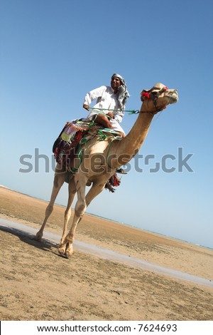 bedouin on travel on a coast of the red sea - stock photo
