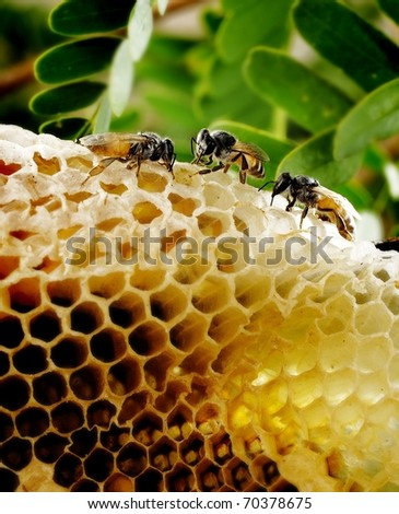 bee and honeycomb on background - stock photo