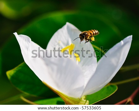 Bee and white flower - stock photo