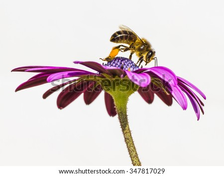 bee anh flower - stock photo