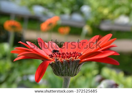 bee are sucking honey from red flowers. - stock photo