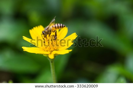 bee are sucking nectar from yellow flowers . - stock photo