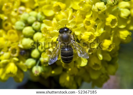 Bee collect nectar - stock photo