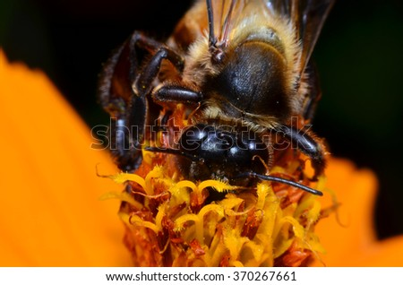 bee collecting nectar from flower in dark night,black back ground