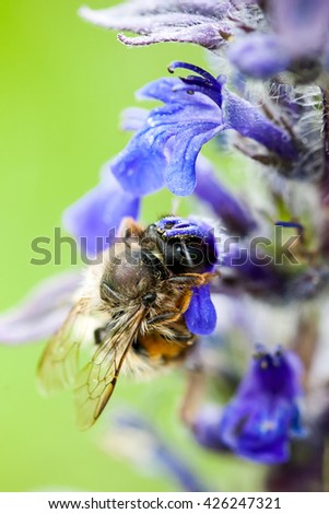 bee collects nectar from flowers