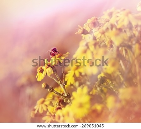Bee collects pollen and nectar from flowers in spring - stock photo