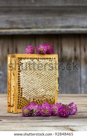 bee comb with honey - stock photo
