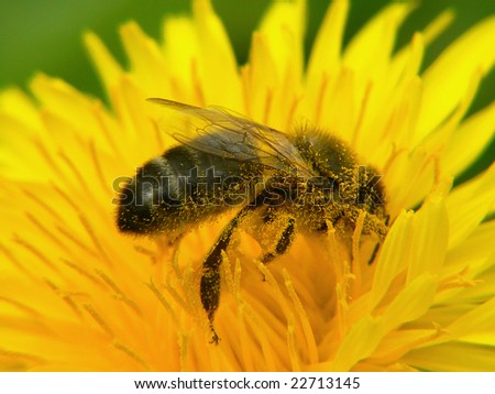 Bee during work on flower - stock photo