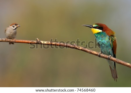 bee eater and small bird on a twig - stock photo