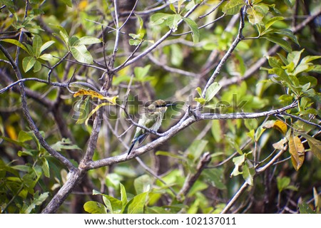 Bee-eater  Rainbow Bird , Kakadu National Park ,australia - stock photo