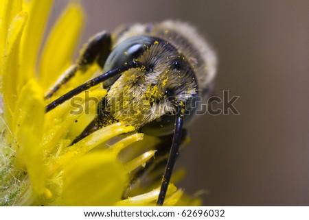 Bee, Evora, Portugal - stock photo