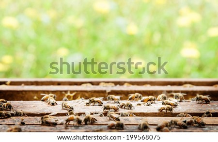 Bee farm in a box and flower background. - stock photo