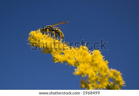 Bee feeding on a flower - stock photo