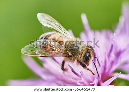 Bee, fly, summer, sun, honey, insect, hum, bloom, flower, nectar,