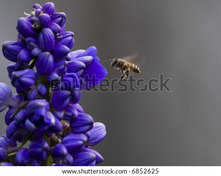 bee flying to the flower - stock photo