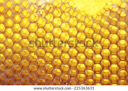 Bee hive background - stock photo