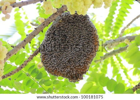 bee hive on a tree - stock photo