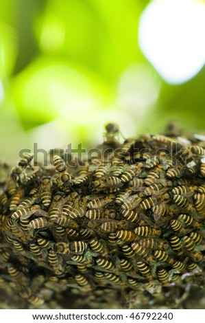 bee hive with natural copyspace background - stock photo