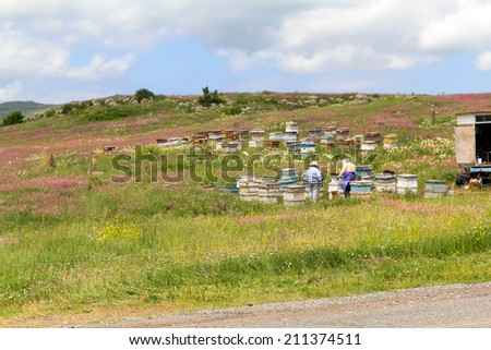 Bee hives in the apiary - stock photo
