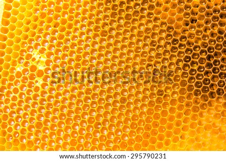 bee honey in honeycomb closeup - stock photo
