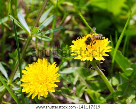 bee honey on flower on green background grass meadow nature - stock photo