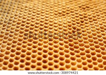 Bee honeycomb background - stock photo