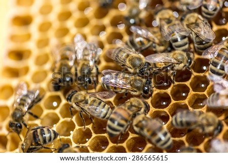 Bee, Honeycomb, Beehive. - stock photo