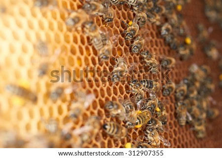 Bee, Honeycomb, Beehive - stock photo