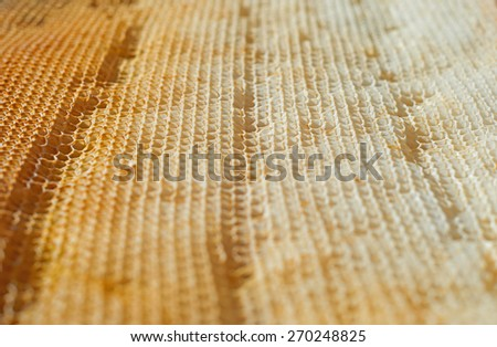 Bee honeycomb cell close-up detail background - stock photo