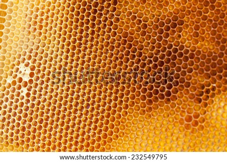 Bee honeycombs filled med close up as a background for design - stock photo