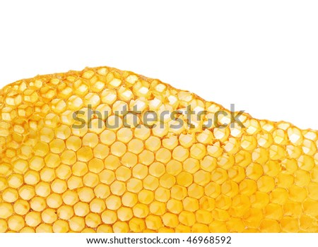 bee honeycombs wax without honey isolated on a white background - stock photo