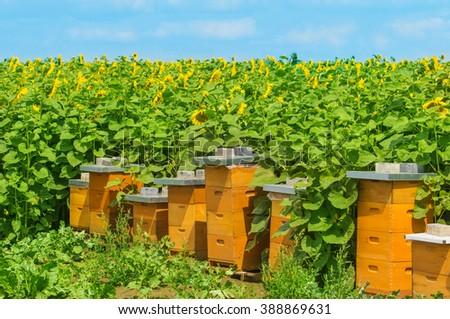 Bee houses at the sunflower field - stock photo
