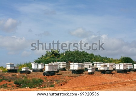 bee houses on green hill - stock photo