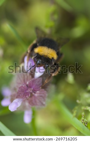 Bee in a flower - stock photo