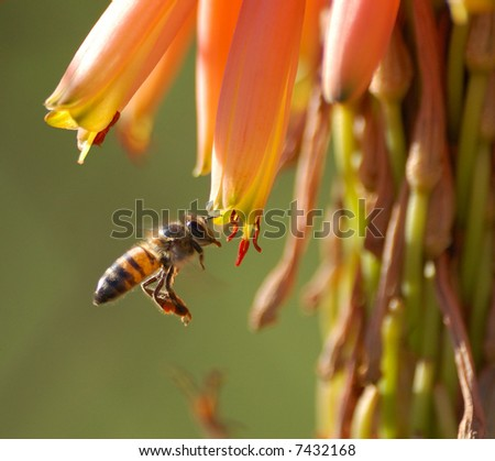 Bee in flight - stock photo
