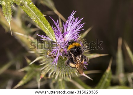 bee in nature - stock photo
